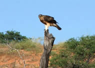 Tour 8: Kgalagadi Transfrontier Park / Augrabies Falls / Witsand Nature Reserve 7 Days Tour