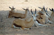 Tour B: Kgalagadi Transfrontier Park 4 Days Tour