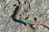 Standard Augrabies Falls National Park Tours - Kgalagadi Lodges Chalets | Kalahari Safaris | Desert Explorers