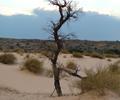 Witsand Nature Reserve | Kalahari Safaris | Kgalagadi, Augrabies & Desert Tours