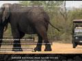 Link Partners | Kruger Park Tours