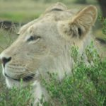 Magic of the Kalahari Tours
