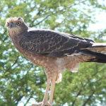 Birds | Kalahari Safaris | Kgalagadi, Augrabies & Desert Tours