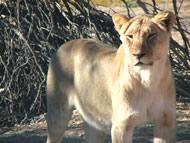 Tour 7: Kgalagadi Transfrontier Park and Augrabies Falls National Park 5 Days Tour