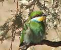 Kgalagadi Transfrontier Park | Kalahari Safaris | Kgalagadi, Augrabies & Desert Tours