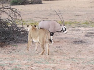 """Sleeping with the Enemy?"" 